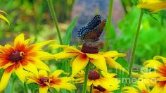 Black Swallowtail Butterfly by Kay Novy