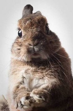 sweet portraits of a bunny...