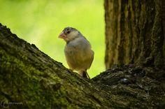 Vogels 6 - RH-Fotografie