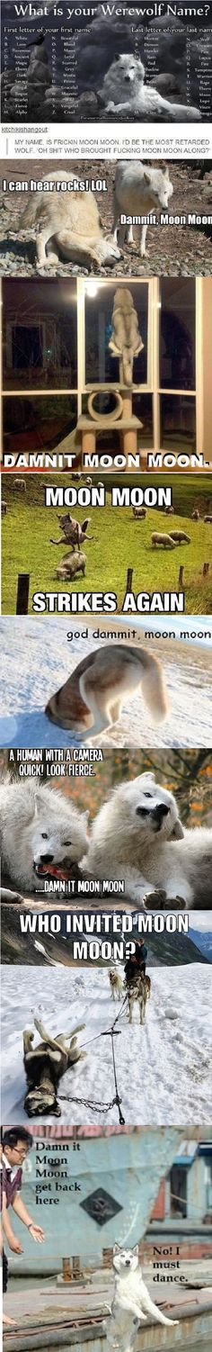 I needed it. Moon Moon may be a derp, but he's a cute derp! <<< Alpha Hunter, but Moon Moon is so cute! Really Funny, Funny Cute, The Funny, Hilarious, Animal Memes, Funny Animals, Animal Humour, Tumblr Funny, Funny Memes