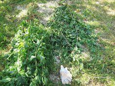 αφρίζει Succulent Terrarium, Succulents, Plants, Succulent Plants, Plant, Planets, Succulent Arrangements