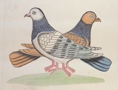 Kalighat painting of a pair of pigeons. Anon.   Calcutta, India, c.1830
