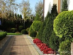 Na zielonej... trawce :) - strona 562 - Forum ogrodnicze - Ogrodowisko