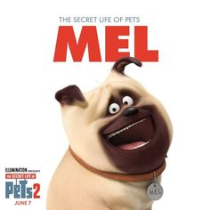 Funny Animals, Cute Animals, Funny Pets, Pug Puppies, Pugs, Dog Facts, Secret Life Of Pets, Disney Junior, Cartoon Dog