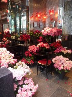 Dani Roses, Hotel Costes | Paris ~ the most fabulous roses, the big cabbage…