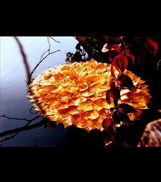 Sélection de Land Art avec des feuilles mortes - Les feuilles mortes se ramassent à la pelle, mais certaines donnent lieu à de vraies œuvres d'art comme vous pouvez le voir dans cette compilation réalisée par des photographes en herbe…