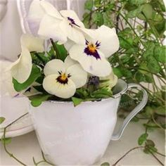 200pcs mixed color rare mini pansy seeds Wavy Viola Tricolor Flower Seeds Bright Beautiful folwer mini bonsai for home garden