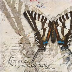 Patricia Pinto Solid-Faced Canvas Print Wall Art Print entitled Living your Dreams II Canvas Wall Art, Wall Art Prints, Poster Prints, Canvas Prints, Butterfly Art, Butterflies, Butterfly Quotes, Butterfly Images, Butterfly Painting
