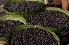 Acai berries, daily dose of antioxidants