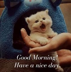 Have a nice day. Good Morning Animals, Good Morning Cat, Very Good Morning Images, Good Morning Wishes Friends, Good Morning Sister, Good Morning Beautiful Pictures, Good Morning Funny Pictures, Good Morning Nature, Beautiful Morning Messages