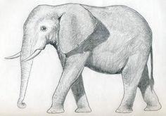 elefant-einfach-zeichnen-dekoking-com-8
