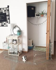 Need a little extra space for your bunny rabbit cage, use a closet!