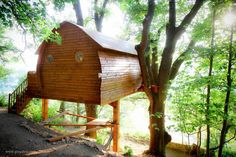 A Tree House Unlike Any Other