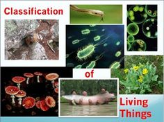 This quiz is on The Classification Systems of Living Organisms. I use this as a short quiz to check to see if my students are keeping up with their studying, but it could also be used as a homework assignment or a study guide for a chapter test on classification. It consists of 45 fill in the blank questions.