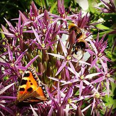 Bloem Bij Vlinder