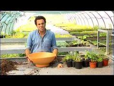 Curso de Plantas Aromáticas, Medicinais e Condimentares (Cantinho das Ar...