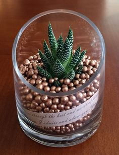 Tapered design showcasing copper pearls and script letters on parchment. Finished with hardy succulent plants the require minimal care. Plant variety may vary by season. Size: 4 x 4 x 4.5 in. Succulen