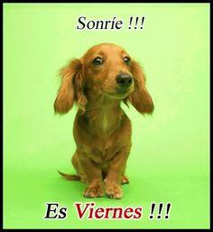 Sonríe es viernes!!!  Persomiar