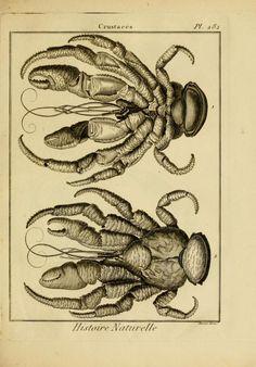 Tableau encyclopédique et méthodique des trois . Coconut Crab, Science Posters, Crab Tattoo, Science Illustration, Antique Illustration, Botanical Drawings, Sea Monsters, Guam, Natural History