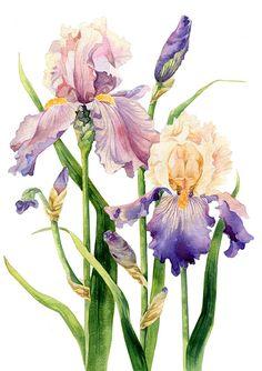 Dudina Kate - Botany on Behance