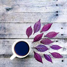 alternative, autumn, bright, colourful, colours, different, grunge, hipster, indie, leaves, light, photography, purple, tea, tumblr, purple tea