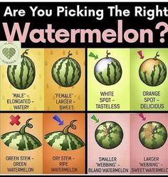 It's always a hit or miss for me trying to find a sweet watermelon. It's always a hit or miss for me trying to find a sweet watermelon. I'm definitely trying this method this summer for picking this really hydrating fr. Watermelon Plant, Sweet Watermelon, Watermelon Ripeness, Watermelon Facts, Watermelon Recipes, Aquaponique Diy, Fruit Picking, Picking Watermelon, How To Choose Watermelon