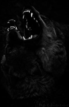 Their jaws snapped and bubbling spit flew into the pressing dark. They were feral and blood thirsty, nothing he's ever had to deal with back in the confines of country acres. Real motherfuckers that are more than glad to tear him into pieces.