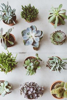 TOAST + BOTANY POP UP / NOTTING HILL. Launches Saturday We have collaborated with independent lifestyle shop from Hackney's Chatsworth Road. Offering a selection of unusual succulents and cacti. Full details at travels. Cacti And Succulents, Planting Succulents, Planting Flowers, Air Plants, Indoor Plants, Potted Plants, Cactus Plante, Plants Are Friends, Cactus Y Suculentas