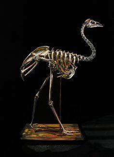 'Extinct dwarf Kangaroo Island emu (Dromaius baudinianus)' by Emma Lindsay, Finalist, Paintings, Waterhouse 2014.