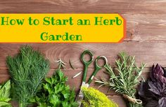Want to learn more about container gardening? Dig through these tips to help you get started!