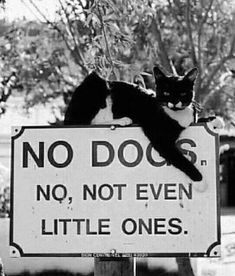 You tell 'em kitty… #cats #dogs