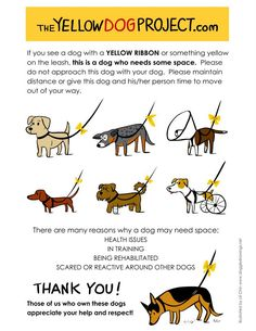 The Yellow Dog Project: If you see a dog with something yellow on its leash/collar it means that dog needs space and not to come up to the dog without permission. Pass this on, I think it's a great idea!