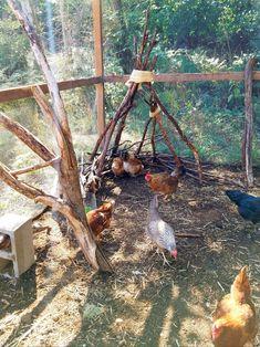 Chicken Run Playground – The Artful Roost Chicken Roost, Chicken Garden, Chicken Life, Backyard Chicken Coops, Chicken Pen, Raising Backyard Chickens, Keeping Chickens, Pet Chickens, Urban Chickens