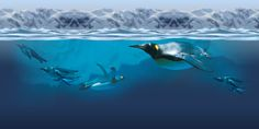 underwater-antarctic-encounter.jpg (1300×650)