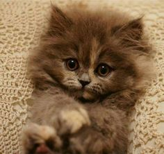 Oh my goodness this kitten is so adorable