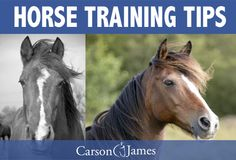 Click the image above to get free horse training tips delivered straight to your inbox.
