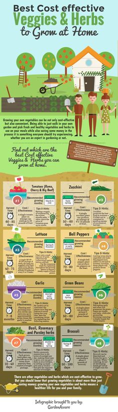 Best cost effective veggies and herbs to grow at home infographic. #goinggreenathome
