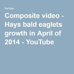 Composite video - Hays bald eaglets growth in April of 2014 - YouTube
