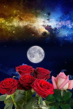 Gyönyörű rózsák és telihold 🌕 Moon Images, Moon Pictures, Nature Pictures, Beautiful Pictures, Moon Pics, Beautiful Moon, Beautiful Moments, Beautiful Roses, Wallpaper Nature Flowers