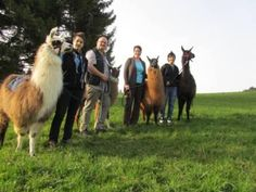 Lama-Trekking Flühli - Eventidee in Flühli Switzerland, Animals, Ideas, Winter Time, Adventure, Animales, Animaux, Animal, Animais