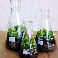 Science beaker terrariums
