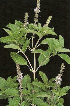 Ayurveda, Aquaponics Fish, Medicinal Plants, Kraut, Wicca, Feng Shui, Aloe Vera, Garden Landscaping, Herbalism