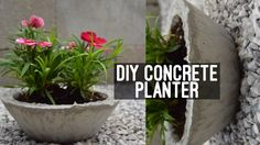 DIY Concrete Cement Planter Easy Cheap Affordable YouTube Tutorial How To Video Small Large Pot Potted Plant Backyard Project Decor Gardening