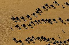 yann arthusbertrand, arthus bertrand, camels, dromedari caravan, aerial photography