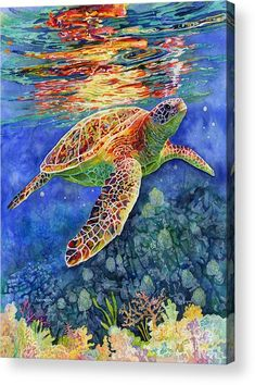 Turtle Reflections Acrylic Print by Hailey E Herrera. All acrylic prints are professionally printed, packaged, and shipped within 3 - 4 business days and delivered ready-to-hang on your wall. Choose from multiple sizes and mounting options. Sea Turtle Painting, Sea Turtle Art, Sea Turtles, Sea Turtle Pictures, Reflection Art, Underwater Painting, Sea Life Art, Ocean Art, Fish Art
