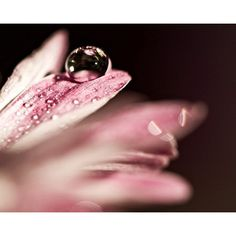 Macro Photography dark black Pink water drop rain romantic women for... ($39) ❤ liked on Polyvore featuring home, home decor, wall art, photo-print, framed wall art, framed flower wall art, flower stem and black home decor