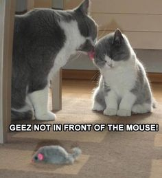 Not in front of the mouse!!!