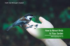 Birds can add something special to your garden: a splash of colour, some music, and maybe a fun new hobby to pass the time. Here's a short guide on how to attract birds and make your landscape a little more interesting. How To Attract Birds, New Hobbies, Irrigation, Color Splash, More Fun, Gardening Tips, Attraction, Colour, Make It Yourself