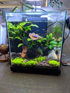 Betta Aquarium, Tropical Fish Aquarium, Diy Aquarium, Aquarium Ideas, Planted Aquarium, Betta Fish, Aquarium Landscape, Betta Tank, Fish Tanks