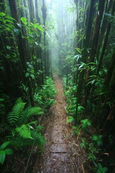 Green Mountain, Ascension Island. Located at about halfway, between Brazil and Angola, in the South Atlantic. Fascinating! Beautiful Islands, Beautiful Places, Amazing Places, Cool Places To Visit, Places To Travel, Travel Destinations, Ascension Island, Island Map, St Helena